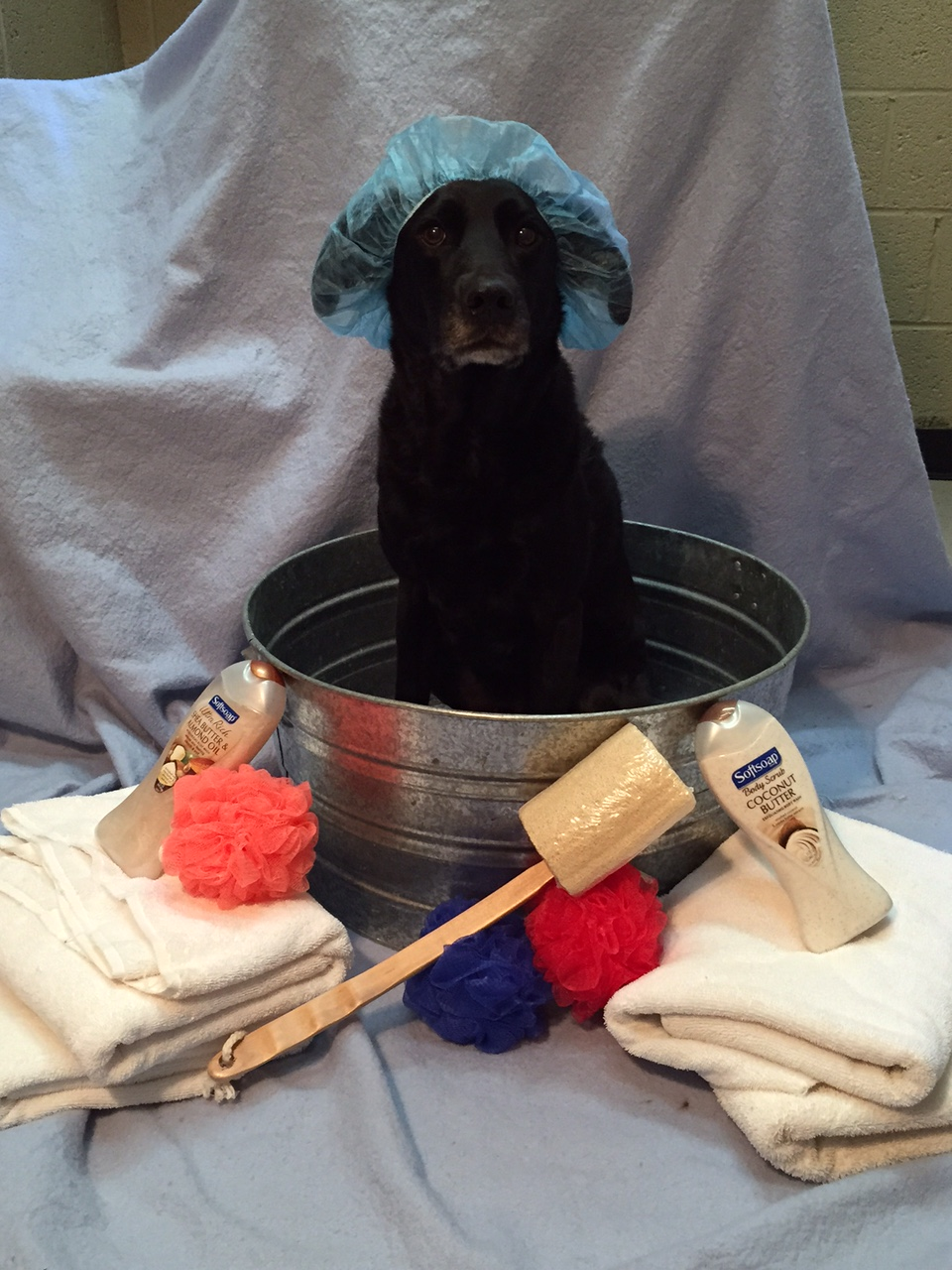 Bathing & Grooming – Mill Creek Veterinary Hospital